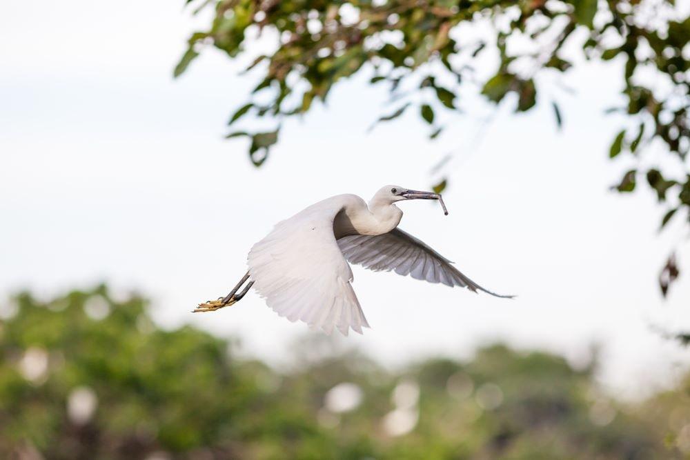 mekong delta vietnam 13