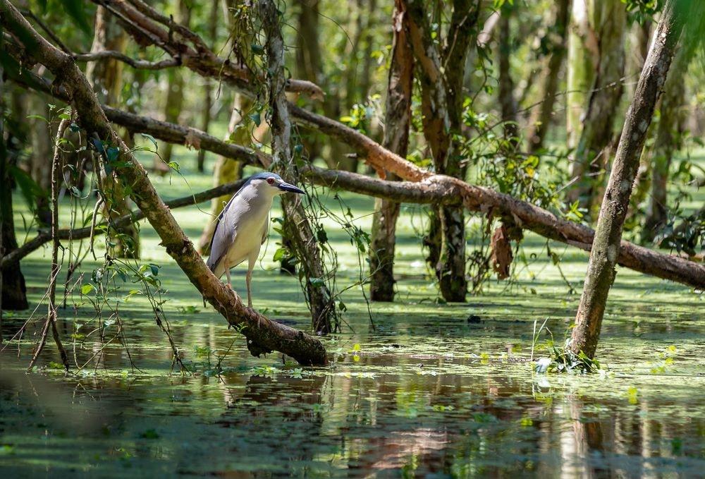 mekong delta vietnam 18